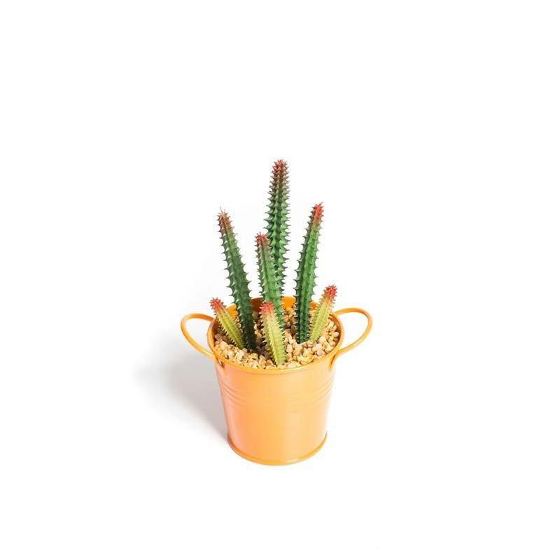 Plantes succulentes dans pot métal orange