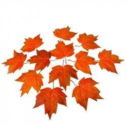 Feuilles d'automne orangées (x12)